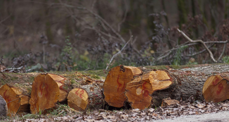 Grumes d'aulne en bordure de route forestière