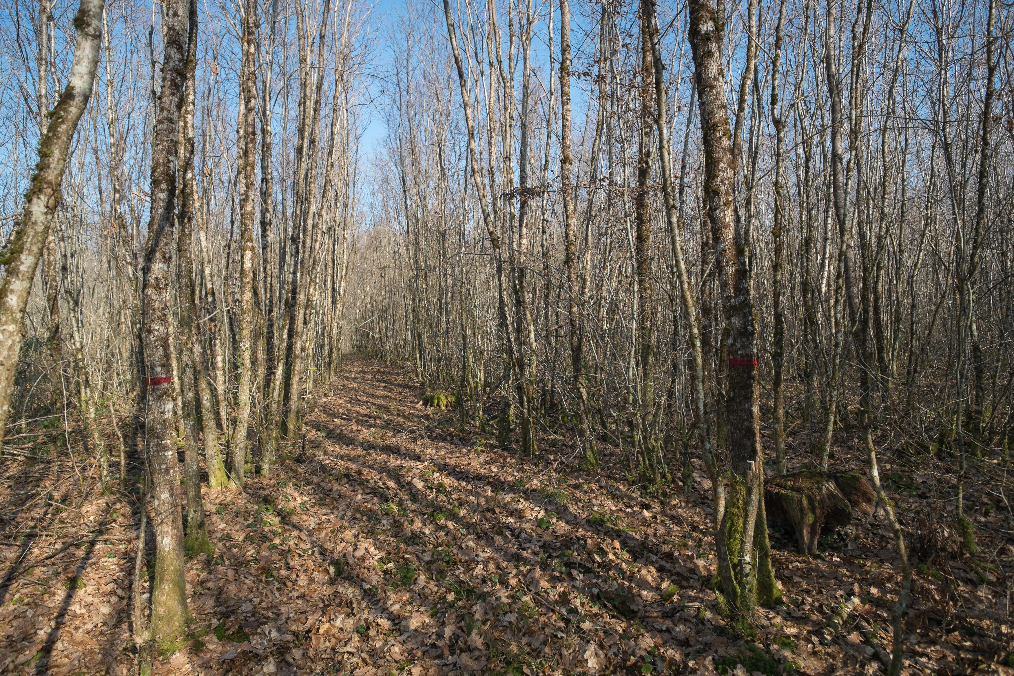 Implanter un cloisonnement, enjeu forestier