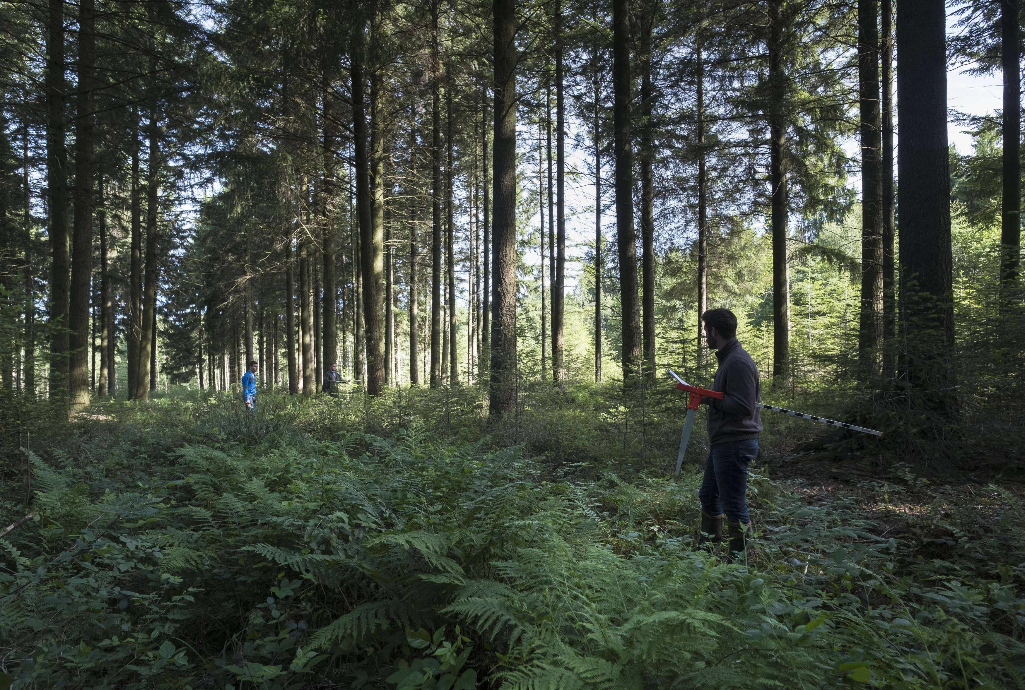 Equipe inventaire de gestion en forêt