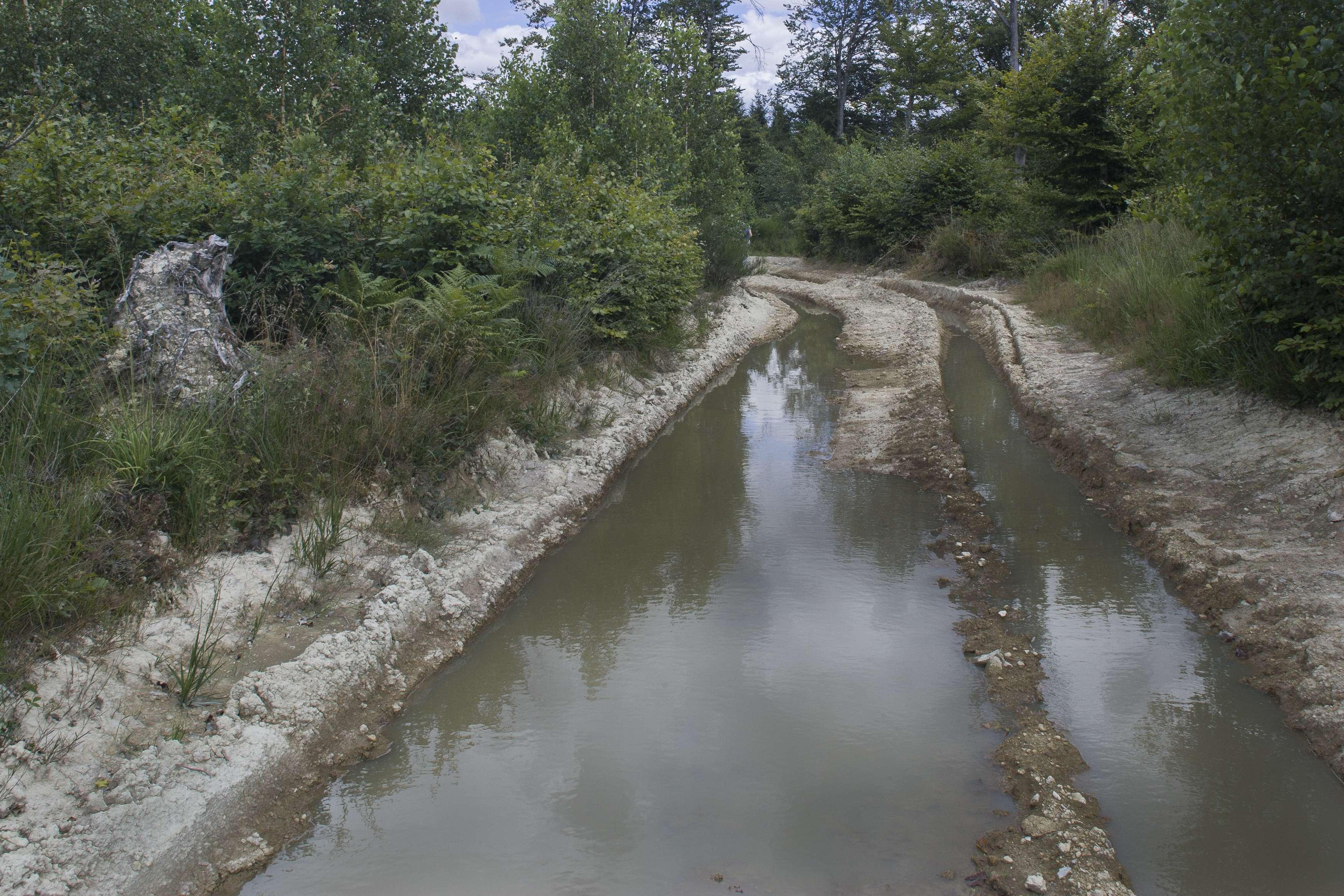 Ejeu forestier : ornières remplies d'eau