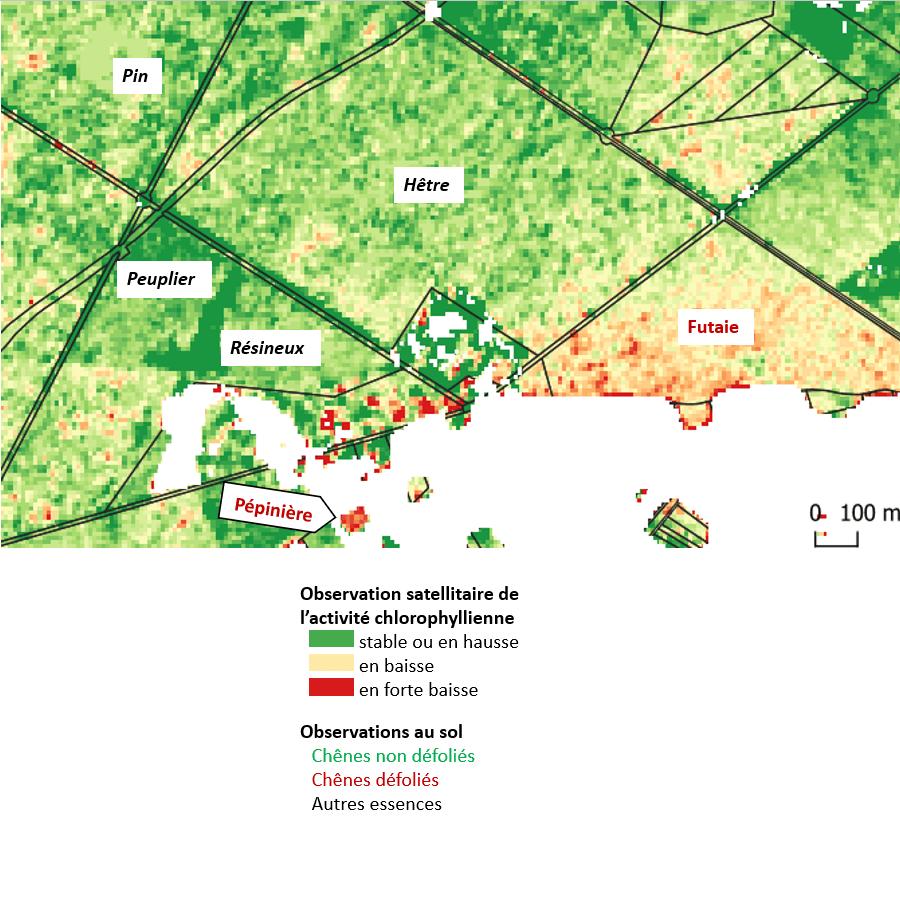 Carte de défoliation, vue satellitaire