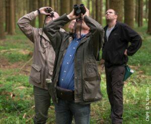 Observation en forêt